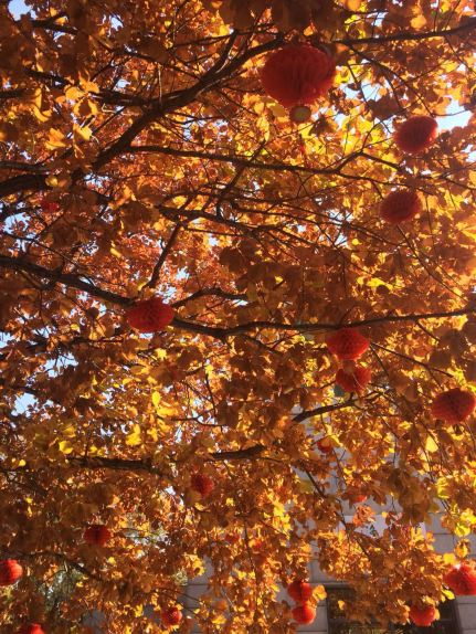 red leaves 5