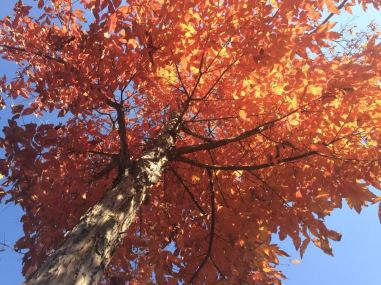 red leaves 8