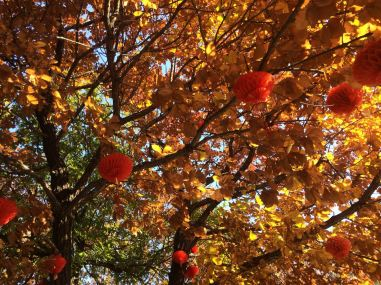 red leaves 9